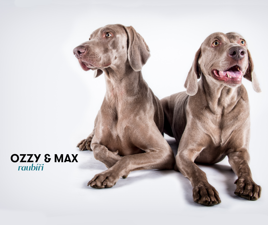 Ozzy_max